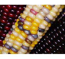 Indian Corn  Photographic Print