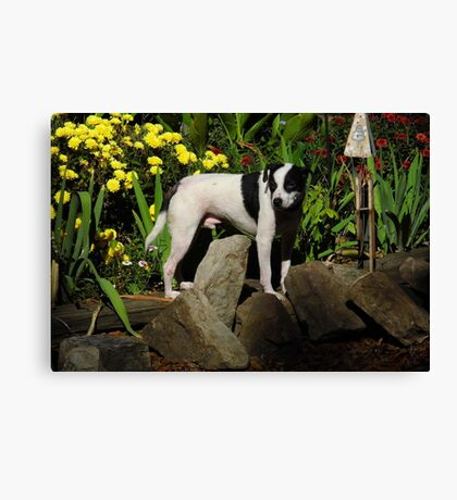 The Late, Great Drop Off, the dog Canvas Print