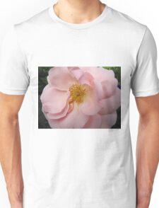 Rosy rose flowers beautiful Unisex T-Shirt