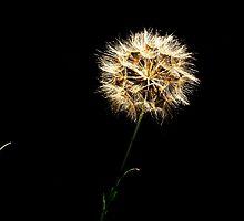 The Dandelion Clock...... by Imi Koetz