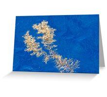 Floating seaweed on the ocean surface Greeting Card