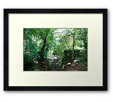 Stream in the woods, Dunster Castle Gardens Framed Print