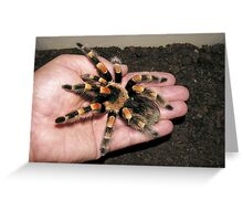 Mexican Red Knee Tarantula Greeting Card
