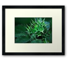 Sunflower Bud Framed Print