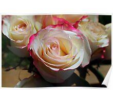 Ribbons of Rose Poster