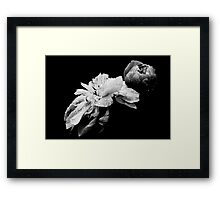 Peonies - After The Rain Framed Print