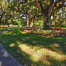 SOME OF THE OAKS AT BROOKGREEN by TJ Baccari Photography