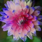 Artistic Dahlia by Kathleen Struckle