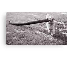 """HAROLD!!!....look what the dog brought home!"" Canvas Print"