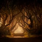Sunny morning in Dark Hedges by JBlaminsky