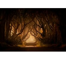Sunny morning in Dark Hedges Photographic Print