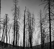 After The 2000 Cerro Grande Fire Los Alamos by Gary Benson