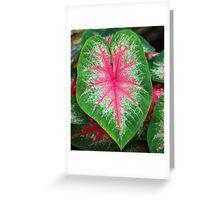 McNeely Leaf Greeting Card