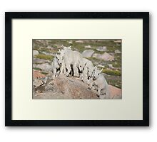 Five against one Framed Print