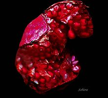 Pomegranate Jewel by Rosemary Sobiera