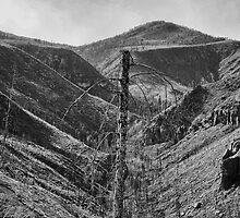 After The 2000 Cerro Grande Fire Los Alamos II by Gary Benson