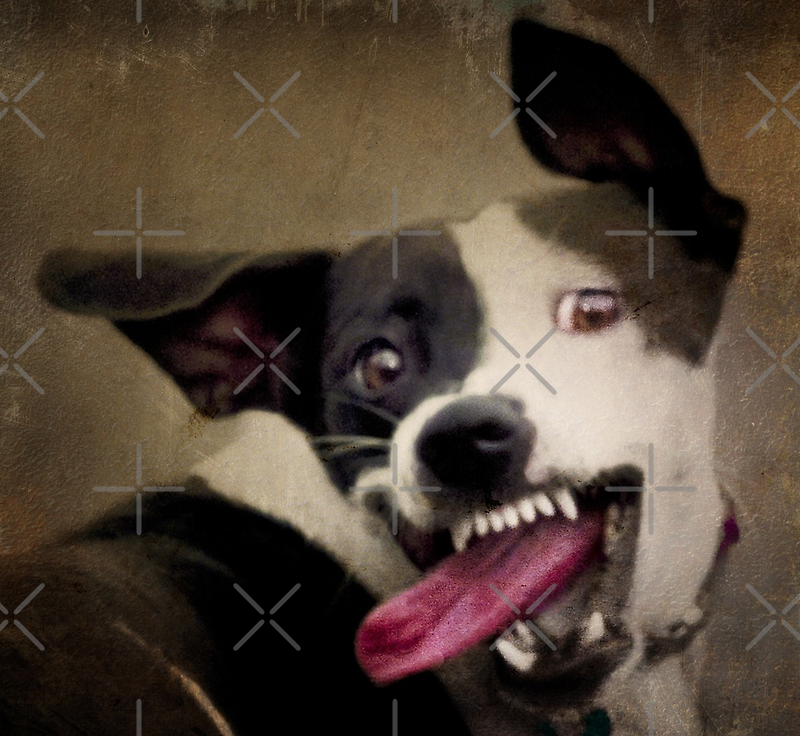 WARNING: OBAMA'S COMING FOR YOUR CHEW TOYS by Alex Preiss