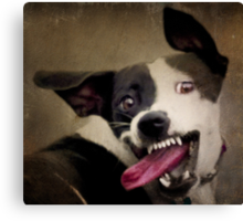 WARNING: OBAMA'S COMING FOR YOUR CHEW TOYS Canvas Print