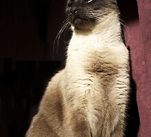 Siamese Cat Beauty Shot by Tara Golden
