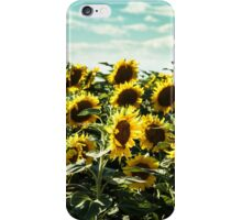 sunflowers field in a summer day iPhone Case/Skin