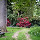 A Seat in the Woods by vivsworld