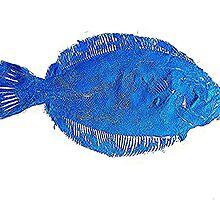Gyotaku fish rubbing, Florida Flounder,Surreal Blue by alan barbour