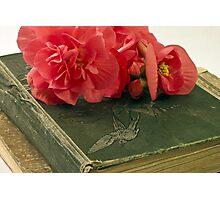 Begonias On Vintage Books Photographic Print