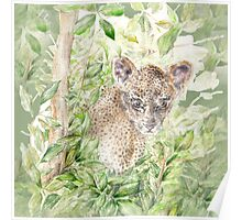 Baby Leopard Cub in the Jungle  Poster