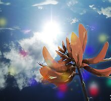 Beautiful Sun light and Tiger's Claw by Nandika-Dutt