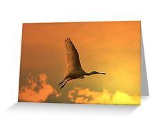 Spoonbill Stork - Sunset Flight of Color - African Wild Birds Greeting Card