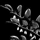 Flowers in the Night B&W by elasita