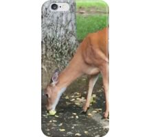 White Tail Deer iPhone Case/Skin
