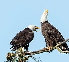 Eagle Chatter by Jim Stiles
