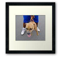 Dogz In The Hood Framed Print