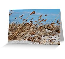 Tame a Wild Wind (horizontal) Greeting Card