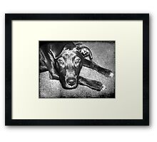 Loyal Friend Framed Print