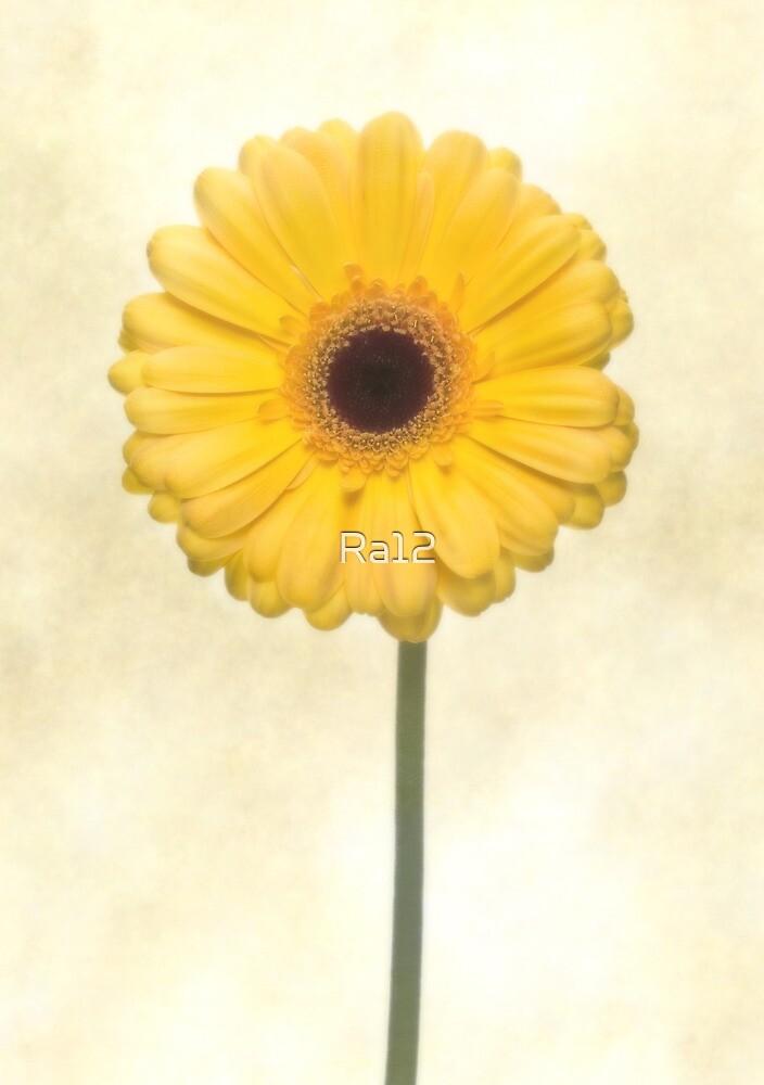 Yellow Gerbera Flower by Ra12