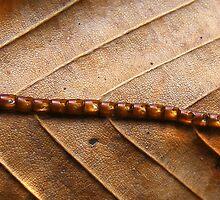 Mystery on a Beech Leaf by elasita