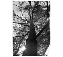 Black and white tree Poster