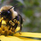 Bee by elasita