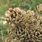 Close-up Ladybirds by Richard Winskill