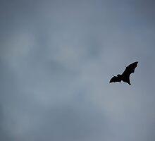 A little batty by Hyperluminal
