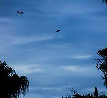 Bats taking flight by Hyperluminal