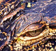 Florida Alligator Sticker