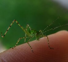 Me & Young Katydid by elasita