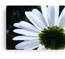 White Aster Canvas Print