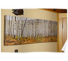 Aspen And Ferns (A 60 x 20 canvas print galley wrapped) Poster