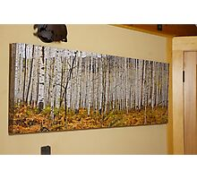 Aspen And Ferns (A 60 x 20 canvas print galley wrapped) Photographic Print