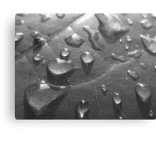 Wet Leaf BW Canvas Print