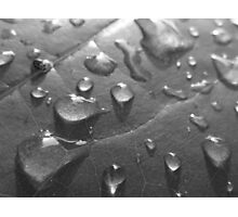 Wet Leaf BW Photographic Print